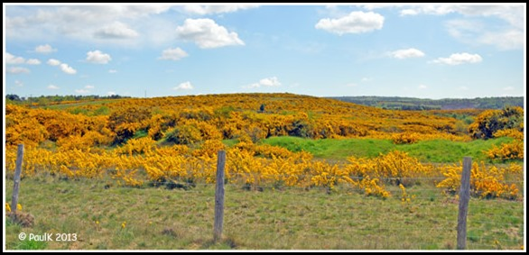 Lande-Bretonne