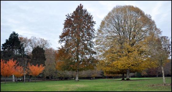 Cheverny-Parc