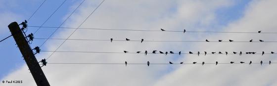Oiseau-Partition