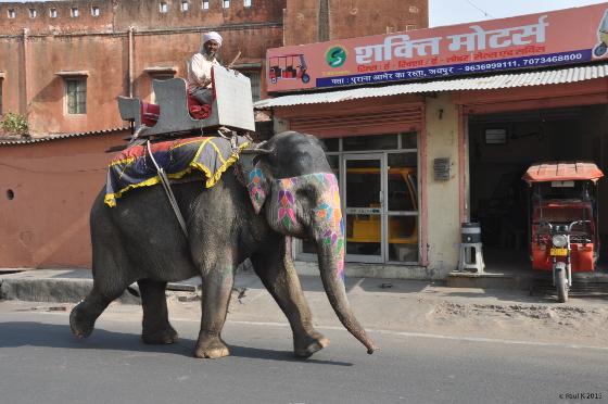 Jaipur-rue-(12)